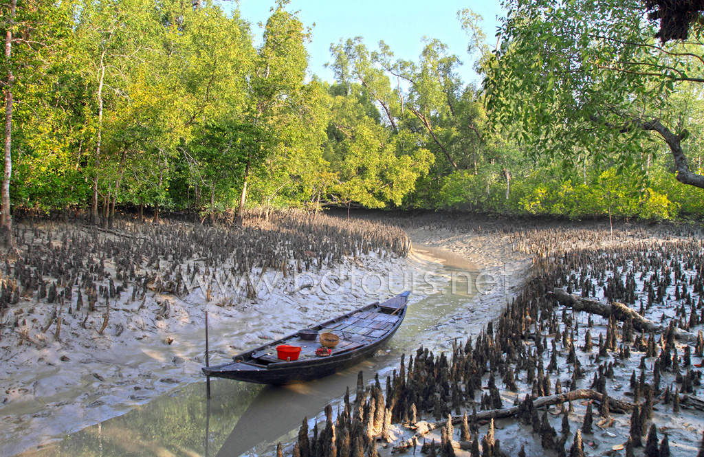 Boat uses for catching fish and crab at the Sundarbans, a UNESCO World Heritage Site and a wildlife sanctuary. The largest littoral mangrove forest in the world, it covers an area of 38,500 sq km, about a third of which is covered in water. Sundarbans, Khulna, Bangladesh. December 2010.