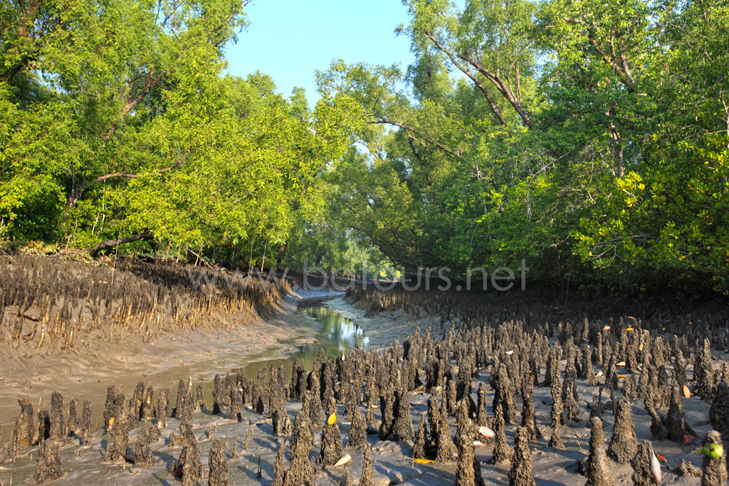 The Sundarbans, a UNESCO World Heritage Site and a wildlife sanctuary. The largest littoral mangrove forest in the world, it covers an area of 38,500 sq km, about a third of which is covered in water. Sundarbans, Khulna, Bangladesh. December 2010.