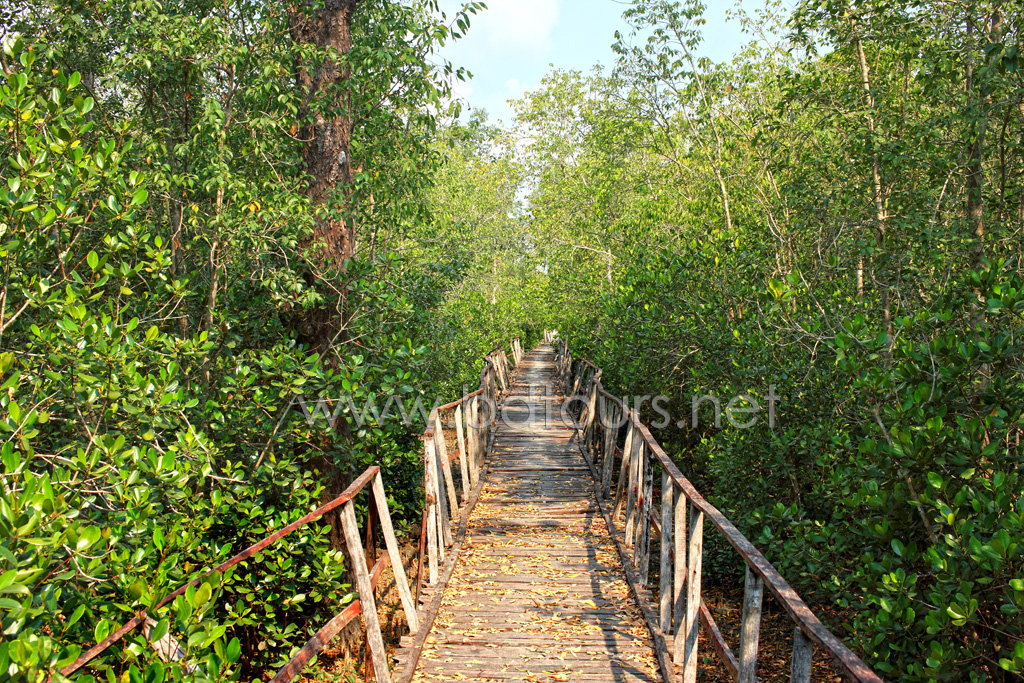 The Sundarbans, a UNESCO World Heritage Site and a wildlife sanctuary. The largest littoral mangrove forest in the world, it covers an area of 38,500 sq km, about a third of which is covered in water. Sundarbans, Khulna, Bangladesh. March 2011.